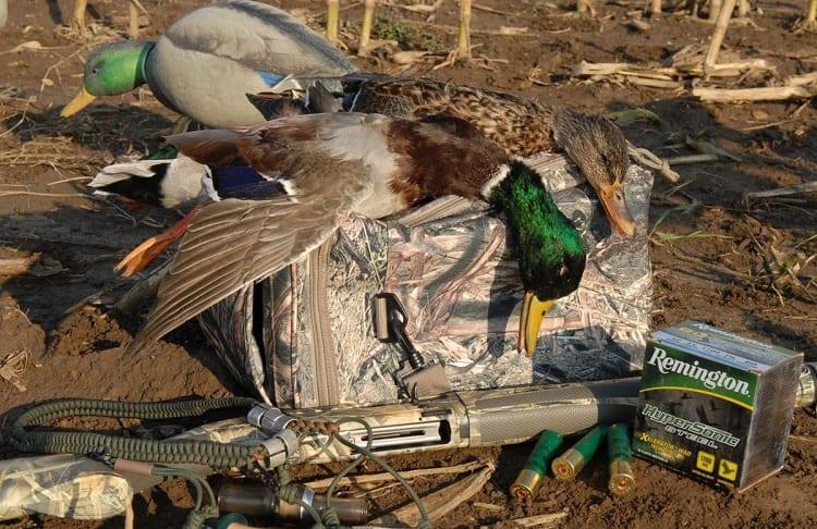 Ducks In Bag