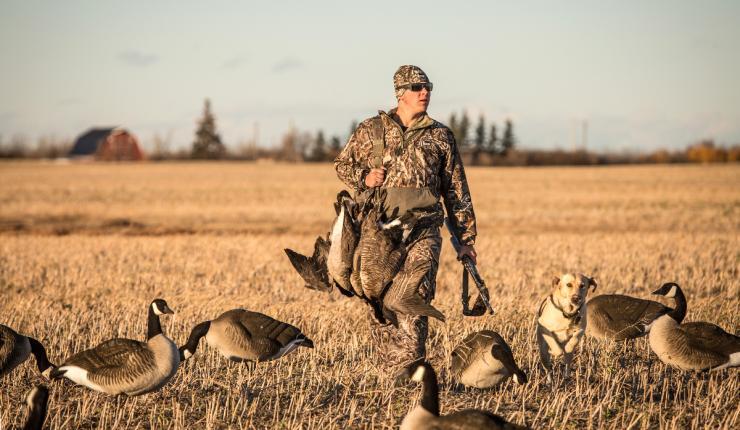Hunting Goose