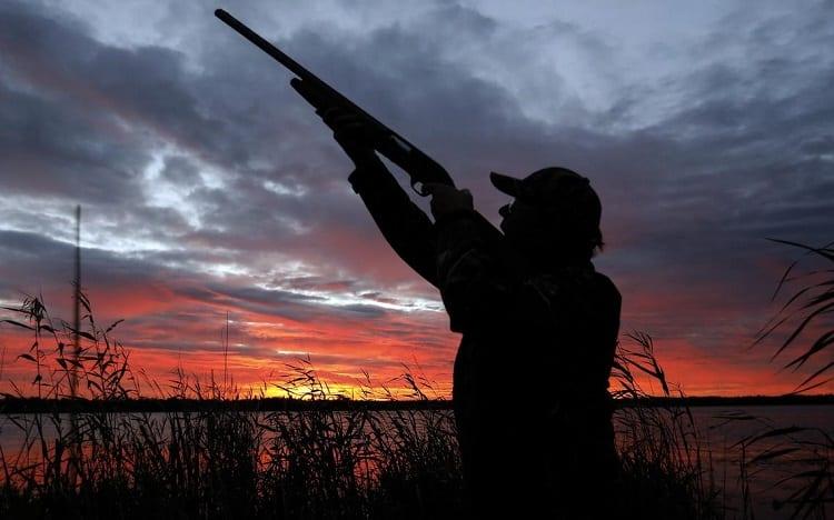 Shooting On Ducks