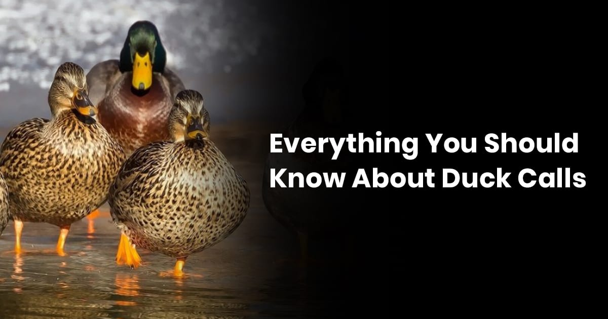 Everything You Should Know About Duck Calls