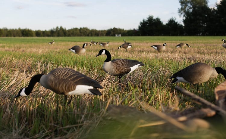 Decoys For Hunting
