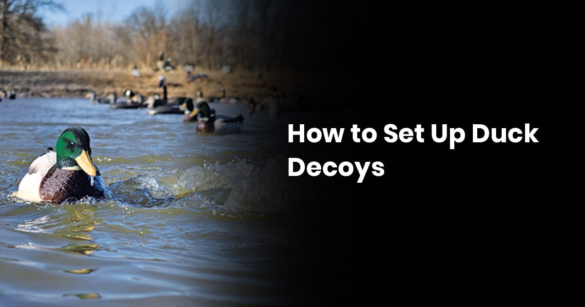 How To Set Up Duck Decoys