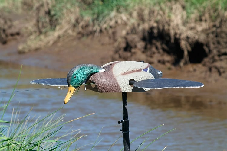 Using Duck Decoy