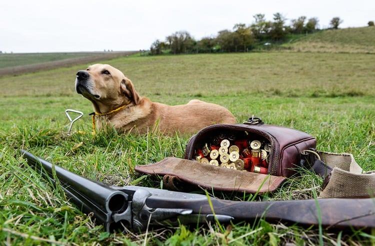 Hunting Shells