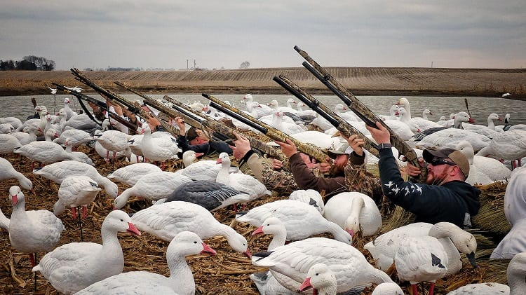 Hunters Surrounded By Decoys