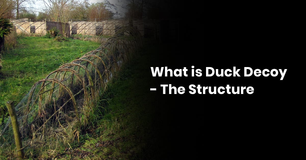 What Is A Duck Decoy The Structure