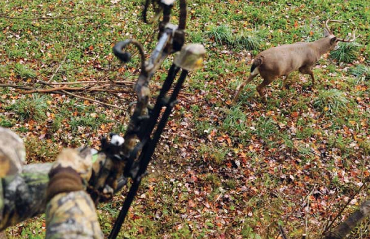 shooting arrows from ground blind