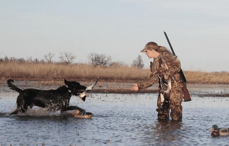 huntig dog brings duck to hunter
