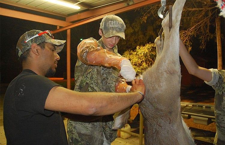 deer meat processing