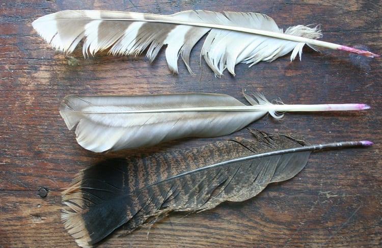 three quills