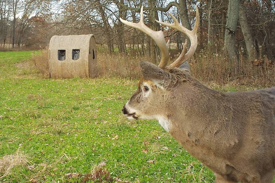 Build DIY Deer Blind In 9 Easy Steps