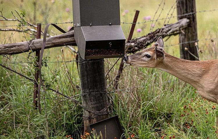 deer feeder on demand