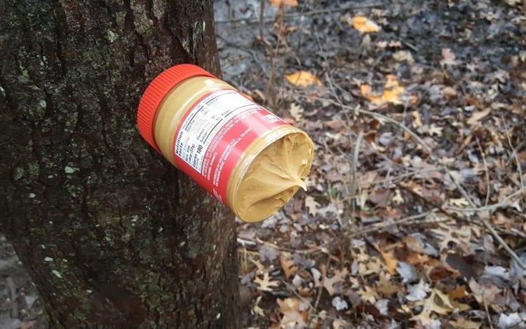 peanut butter on tree