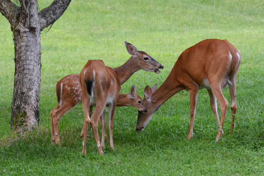 Different Ways To Feed Deer