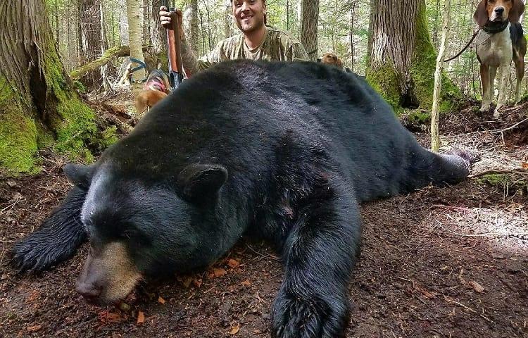 hunting black bear