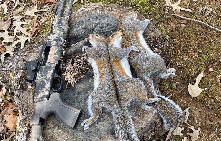 Humble Squirrel Hunt