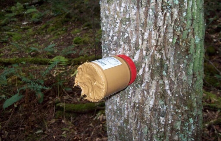 peanut butter feeder