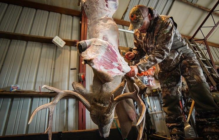 skinning deer